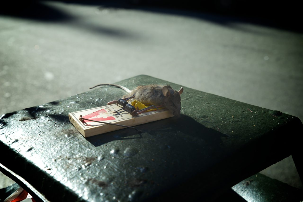 rat souris poubelle