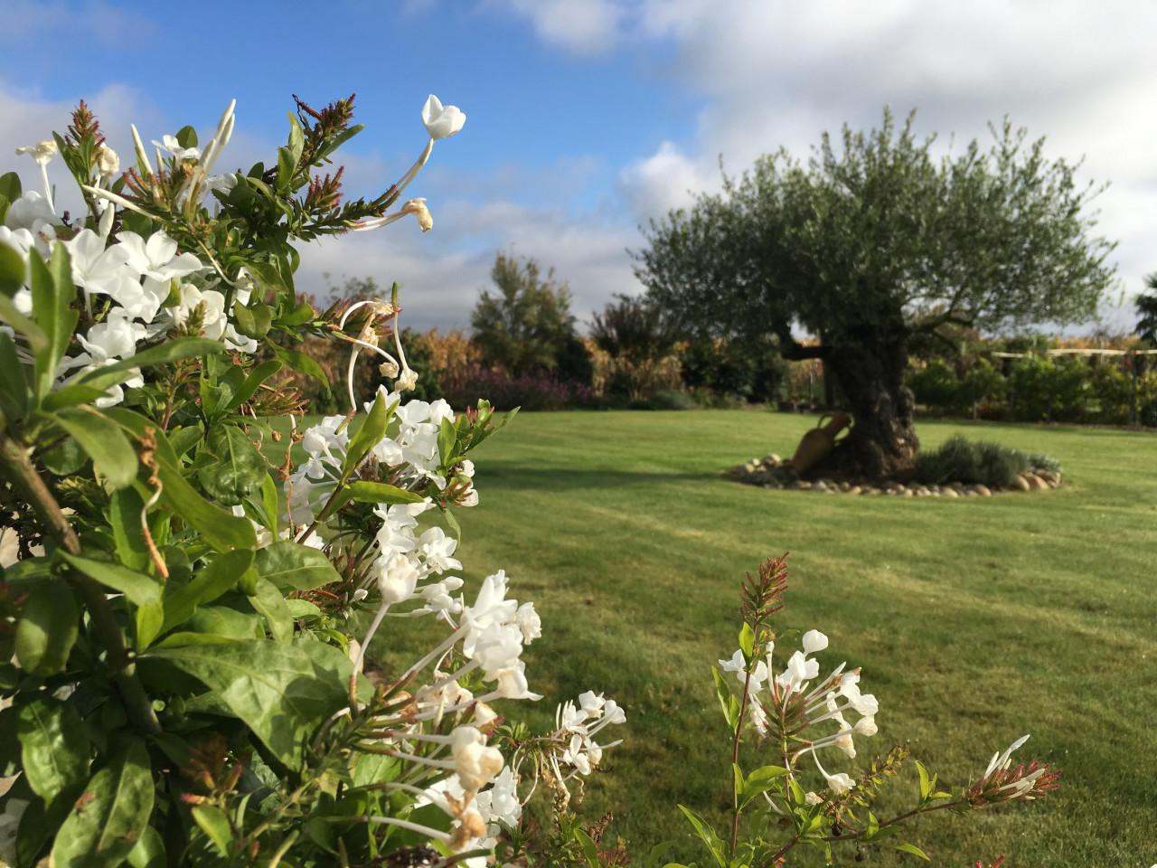iPhone 6s fleur paysage