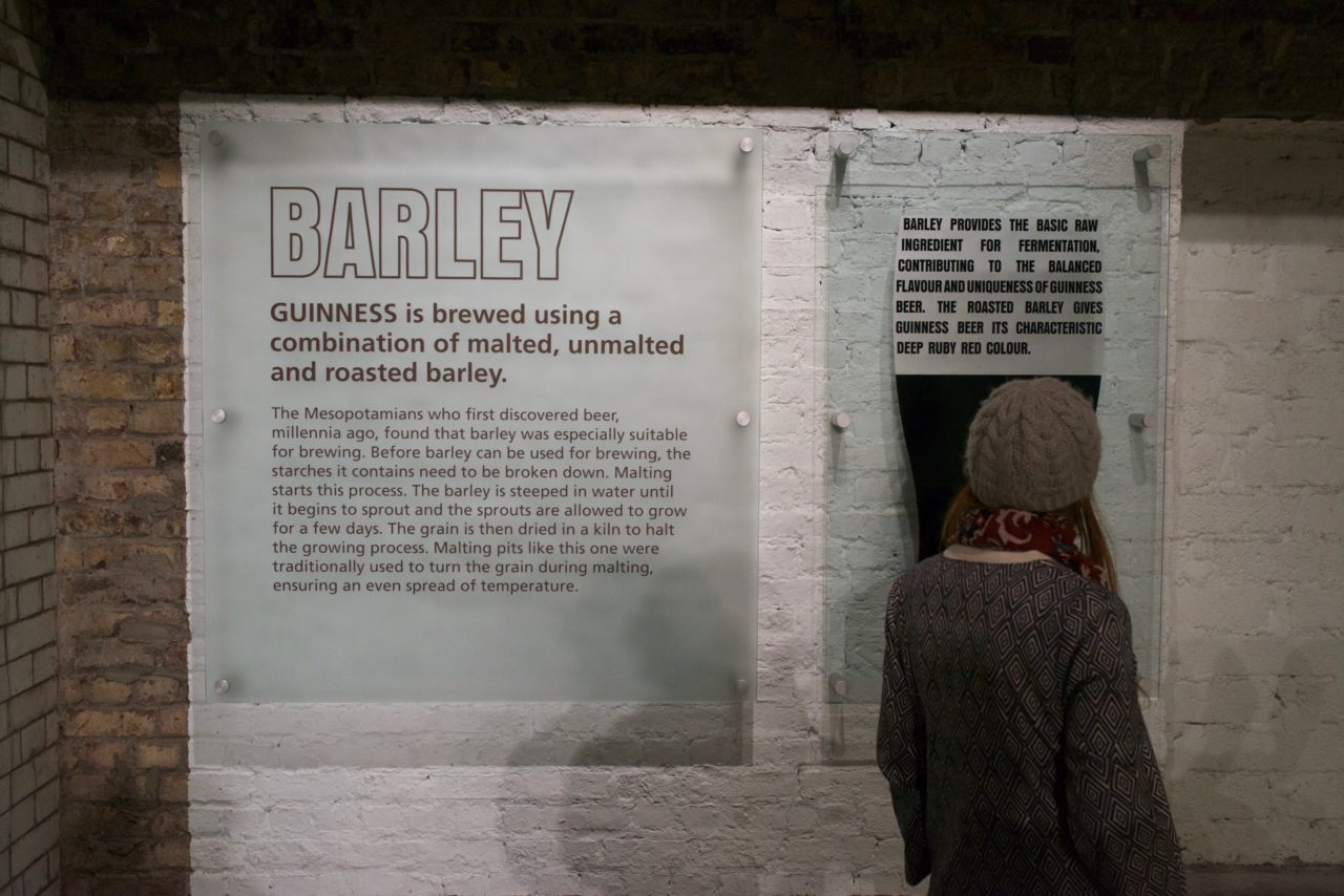 guinness storehouse barley