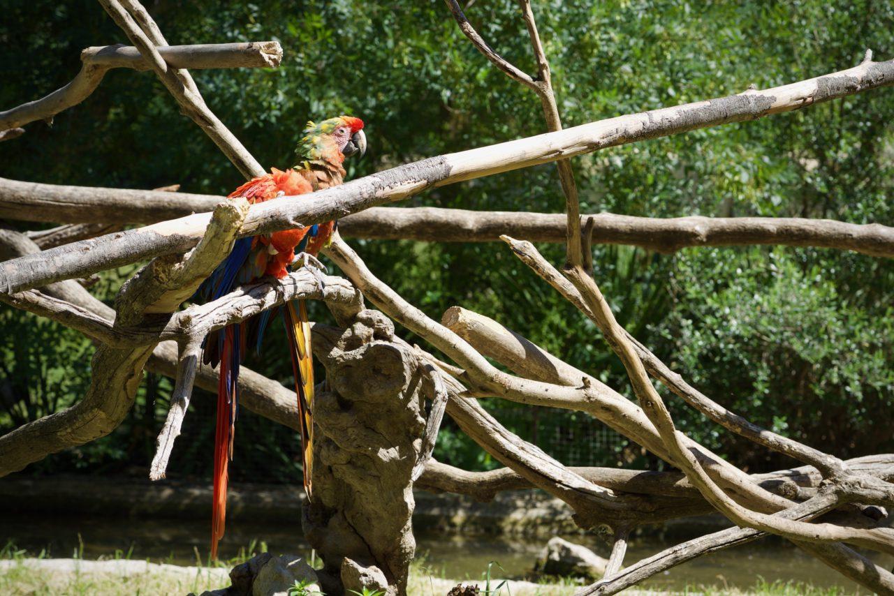 perroquet tronc arbre