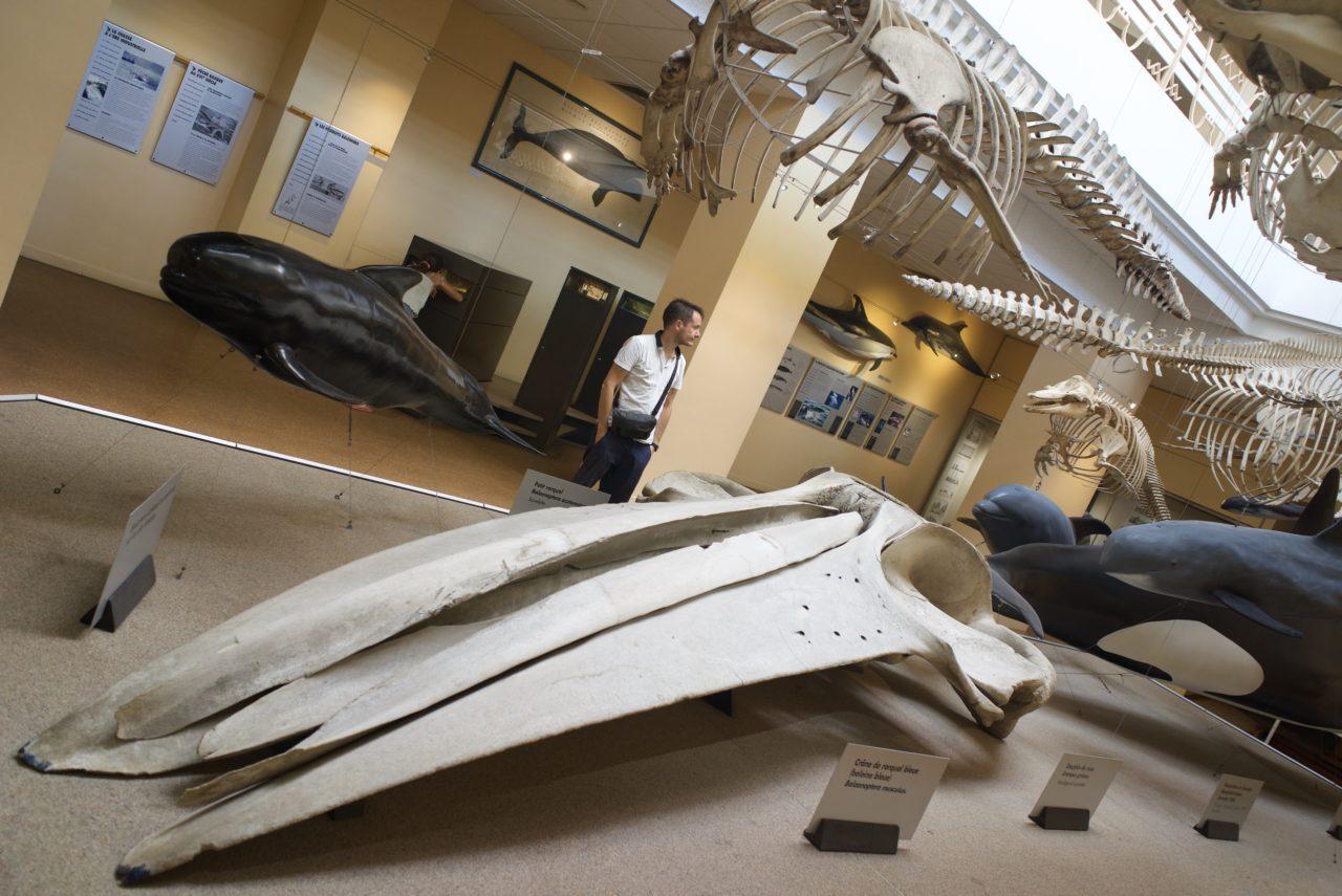 squelette baleine aquarium biarritz