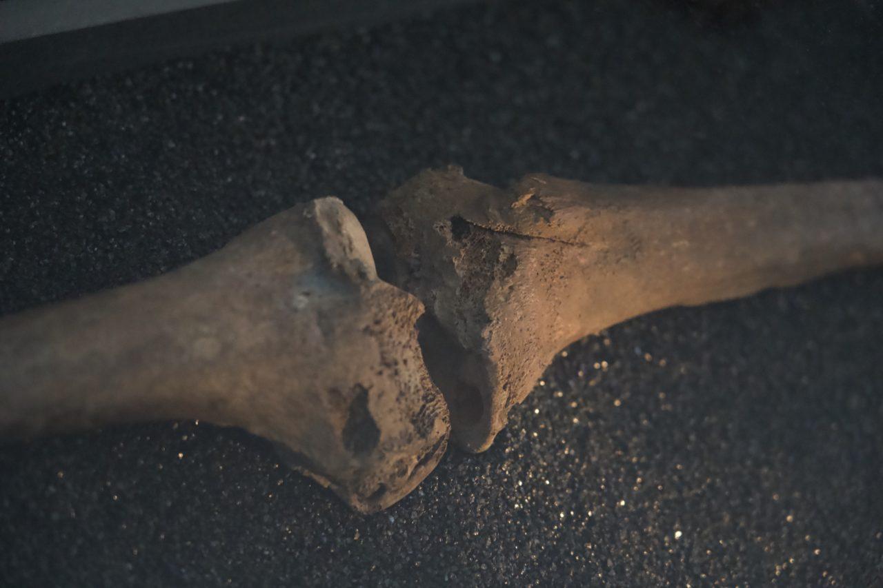 squelette viking genou