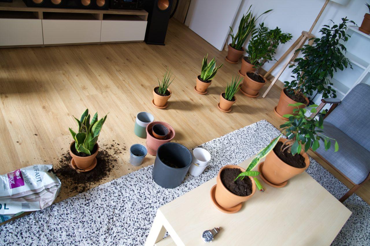 pot terre cuite plante verte